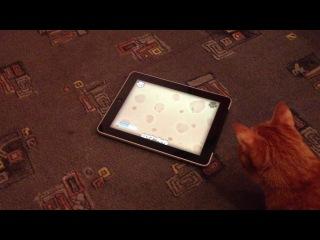 Фокси играет в iPad